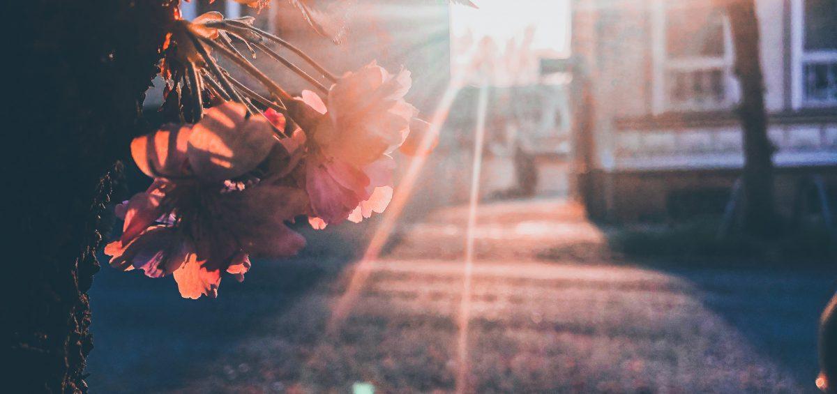 Sonnenuntergang, Haus, Baum, Blüte, Sonnenstrahlen